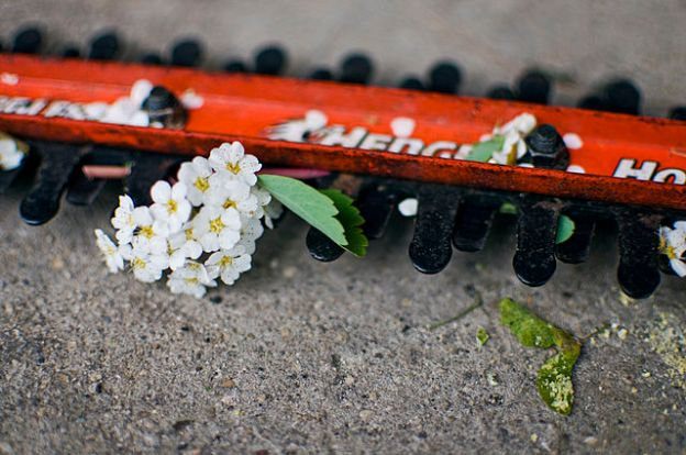 640px-Hedge_trimmer_with_white_flowers
